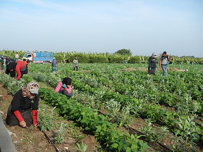 Local farmers planting beans and other crops immediately after the task was cleared.