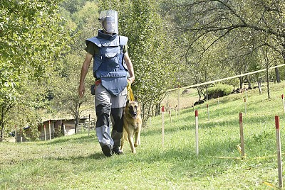 Demonstration of demining with mine detection dogs